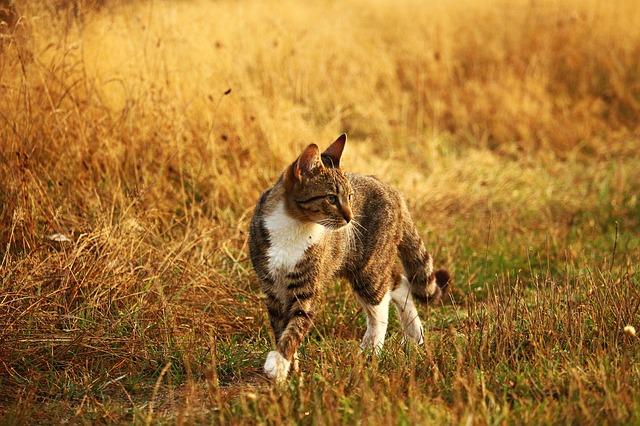 kočka na lovu