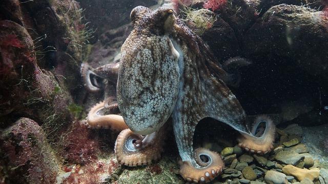 Majú chobotnice osobnosť?