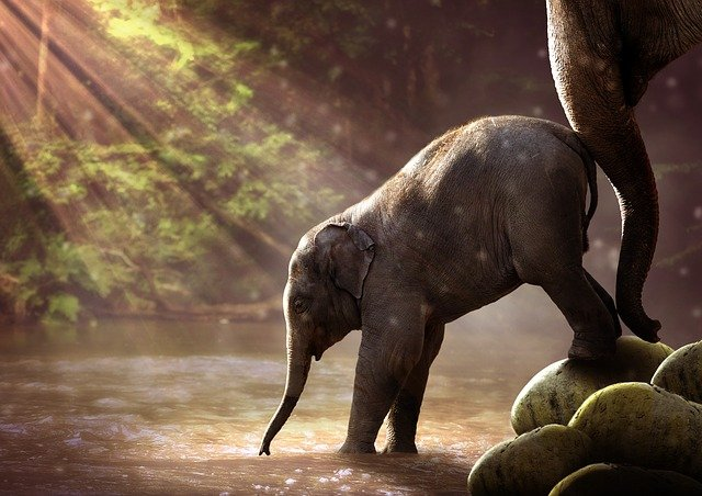 Najväčšie, najvyššie, najťažšie… naj zo sveta zvierat